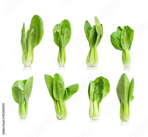 Fotografia Collection of bok choy  vegetable (chinese cabbage) isolated on white background