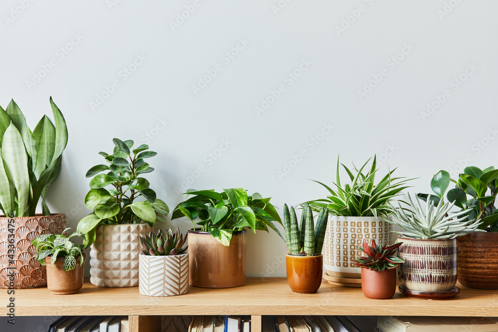 Obraz Stylish composition of home garden interior filled a lot of beautiful plants, cacti, succulents, air plant in different design pots. Home gardening concept Home jungle. Copy spcae. Template fototapeta, plakat