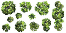 Collection Of Abstract Vector Green Tree Top View Isolated On White Background  For Landscape Plan And Architecture Layout Drawing, Elements For Environment And Garden, Green Grass Vector Illustration