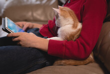 Midsection Of Woman Sitting On Sofa With Cat And Using Tablet