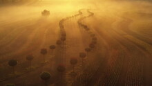 Dawn On Tulip Fields In The Fog In The Park.