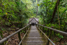 From Above Scenic View Of Narrow Wooden Stairs On Hill Slope In Verdant Woods In Indonesia