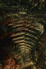 Green Leaves Of Fern Plant Growing In Shadow In Forest On Sunny Day