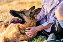 Side View Of Female Owner Sitting On Lawn In Park With Obedient Fluffy German Shepherd Dog