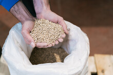 From Above Crop Unrecognizable Male Worker Demonstrating Dry Germinated Cereal Above Bag On Floor In Brewery