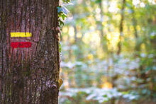 Hiking Red And Yellow Signs Drawn On Tree Trunk In Abundant Summer Garden