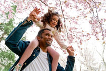 Content Ethnic Man Carrying Charming Girl On Shoulders Under Blossoming Tree On Lawn In Park