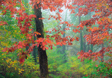 Picturesque Scenery Of Autumnal Wood With Colorful Foliage Trees During Fall Season