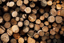 Textured Background Of Cut Firewood In Rows With Uneven Surface And Green Plant Sprigs In Daylight