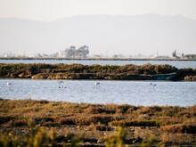 Flock Of Wild Herons Birds Feeding In Shallow Water Near Grassy Coast Of Bay In Countryside