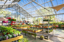 Spacious Facility Of Garden Center With Assorted Potted Plants And Blooming Flowers Lit By Sunlight