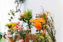 Bunch Of Blooming Bright Orange Lily Placed In Vase Near Assorted Colorful Flowers In Store