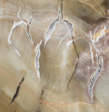 Texture Of Macro Photography Of Patterns And Colors In A Piece Of Petrified Wood (Woodworthia Species) From The Chinle Formation In Arizona; Approx. 225 Million Years Old