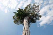 Spectacular Tree Seen From Below