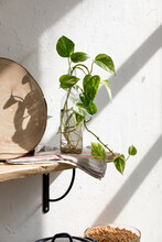 Green Seedling Of Houseplant Placed In Glass Bottle With Water On Wooden Shelf Near White Wall In Kitchen