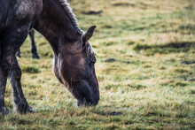 Horse On Blurred Background Of Meadow With Fresh Green Grass
