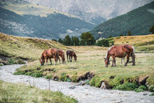 Peaceful Horses Eating Fresh Green Grass In Meadow Near Slope With Verdant Forest In Daytime