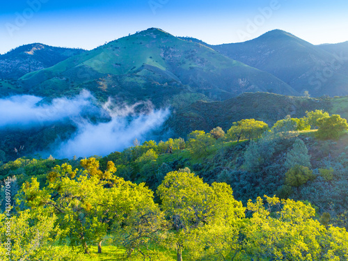 aerial view of blue oaks covering hillsides at sunrise, Figueroa Mountain  area Fototapet