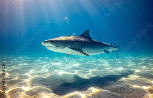 Obraz na plátně shark in the sea