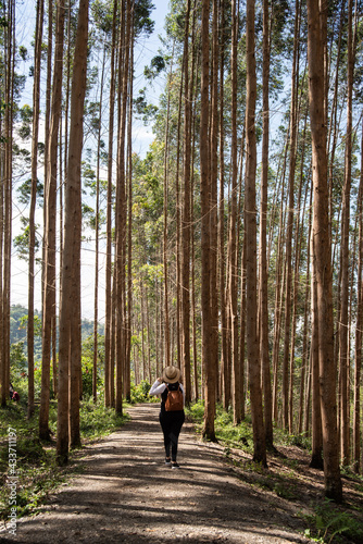 Carta da parati woman with hat and backpack on the ecological hiking trail in the forest