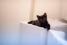 Closeup Shot Of A Cute Black Kitten Lying On A White Surface
