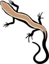 A Black Lizard With A Brown Back And Black Tail On A White Background. Vector Drawing, Tattoo Sketch.
