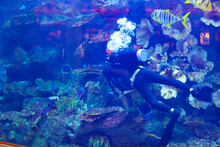 Diver Feeding Fishes In Aquarium, View From Glass