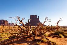 枯れ木とミトン