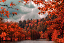 Autumn Forest In The Morning