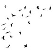 vector, isolated, birds fly black silhouette flock