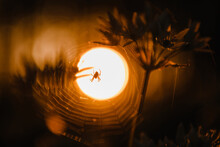 A Spider In A Spider Web With Bokeh Sunset Behind And Silhouette Style. A Silhouette Spider In The Forest Nature