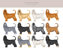 Afghan Hound All Colours Clipart. Different Coat Colors Set