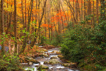 Smith Creek Flowing From Anna Ruby Falls, Georgia, USA