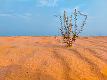 A Unknown Plant In Sand Desert With Sky Background