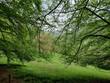 Blick durch ein Fenster aus Bäumen in ein grünes Tal im Frühling im Odenwald