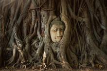 Ayutthaya Historical Park, Head Of Buddha Statue In The Tree Roots, Wat Mahathat Temple, Phra Nakhon Si Ayutthaya Province, Thailand