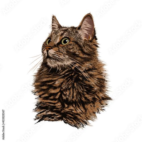 Obraz na plátně gato animal ilustración vector