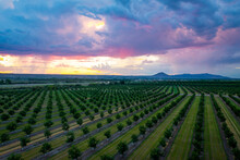 Summer In Mesilla Valley, New Mexico With Picacho Peak In The Distance