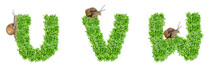 Letters U, V, W Made Of Grass And Snail, Snail Crawls On Grass