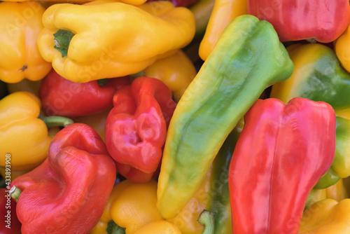 Fotografía Diversi tipi di peperoni