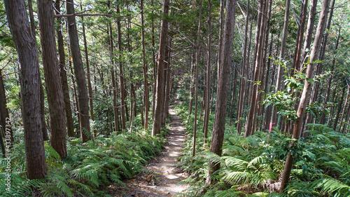 Obraz na plátne 紀伊山地の山林の中のハイキングコース