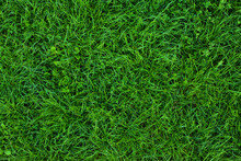 Long Not Cutted Lawn Texture. Long Grass In Park, Overhead Shot. Not Mowed Grass. Uncared Green. Mound Without Maintenance. Overgrown Turf. Oversized Grass Structure. Squalid Sward. Neglectful Grass.