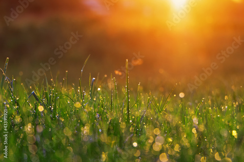 Photo Green grass with morning dew under the rays of the bright dawn sun