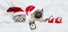 Kitten And Pug Puppy Wearing Santa Hats Sleep Together With Gift Box Under A White Blanket On A Bed At Home. Pug Puppy Holds Alarm Clock. Top Down View