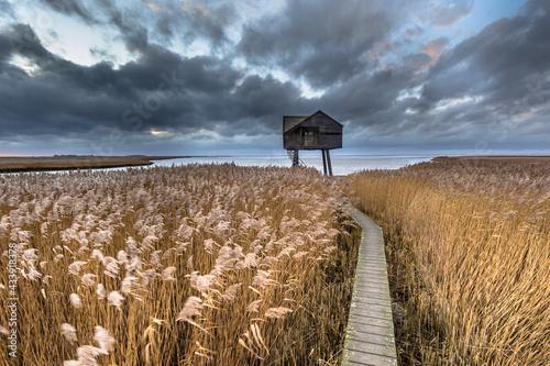 Wooden walkway through tidal marsh Fototapet