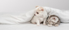 Chihuahua Puppy And Tabby Kitten Sit Together Under White Warm Blanket On A Bed At Home And Look Away On Empty Space