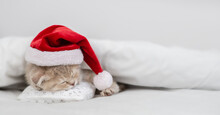 Cute Kitten Wearing Red Santa's Hat Sleeps Under Warm White Blanlet On A Bed At Home.Empty Space For Text