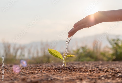 Obraz na płótnie Hand nurturing and watering young baby plants growing in germination sequence on