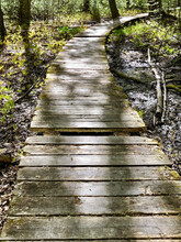 Boardwalk Over A Wetland Trail With Missing And Broken Wooden Slats. Dappled Light. Ontario, Canada.