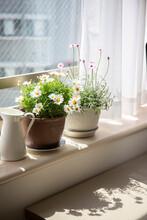 窓辺に咲く鉢植えの花